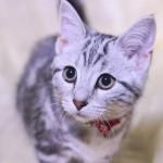 これは盲点!猫の去勢・避妊手術とペット保険