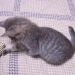 初めて猫を飼うときの、心構えと準備