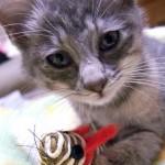 猫保険の必要性、あなたはどんなときに感じますか?
