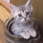 【生まれたての赤ちゃん猫の飼い方】最初に知っておきたいこと
