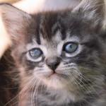 赤ちゃん猫を飼うことになったら、最初に動物病院へ