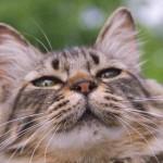 重要!猫がペット保険に入れないケースとは?