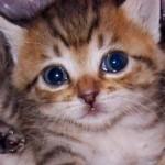 ご存知ですか?赤ちゃん猫は自分で体温調節ができません。