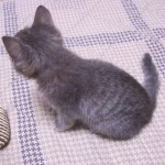 赤ちゃん猫のトレイのお世話の仕方