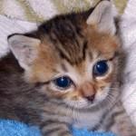 赤ちゃん猫には「社会化期」という期間があります。