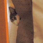 猫白血病ウイルス感染症の症状について