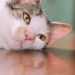 au損保「あうて」ペットの保険の特徴、評判、口コミ