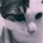 ケージ(檻)を使った上手な猫の飼い方