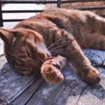 猫に嫌われない上手な薬の飲ませ方