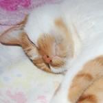 猫の臭覚は人間の数十万倍?活用法はコレだ!