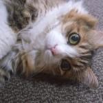 猫アレルギーに空気清浄機が効果あり!選び方のコツをご紹介