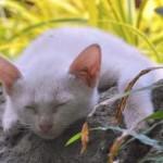 「猫侍」(主演:北村一輝)というテレビドラマ、ご存知ですか?