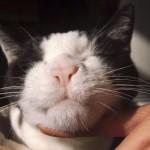 猫が咳き込む。典型的な気管支炎の症状です!