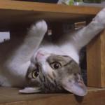 猫保険の恩恵を実感!かさみがちな通院費用。