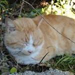 猫の医療費に備える!ペット保険加入のメリット・デメリット