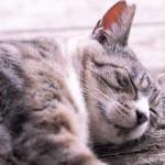 猫の健康チェックポイントとは?