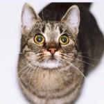 ご存知ですか?猫と犬の起源は同じなんですって!