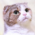 猫の耳に黒い耳垢が大量発生!考えられる2つの原因とは?