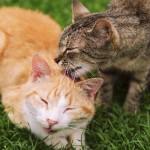 老猫の世話に役立つ介護用品