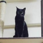 わずか6cmの幅の隙間でも、猫が通り抜けられる訳とは?