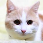 老猫との生活、お世話の仕方、接し方