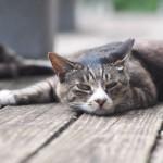 老猫の便秘解消法