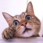 老猫に適した餌の量や、与え方の工夫について