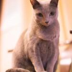 老猫に適した食べ物(シニアフード)について