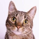 猫に与えてはいけない食べ物|知らなかったでは済まされない!