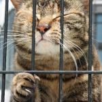 餌を食べない老猫に、上手に強制給餌するためのポイント