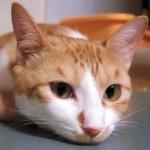 高齢猫がかかりやすい病気と、その症状について