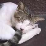 老猫のワクチン接種は、危険を伴う場合も!