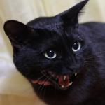 猫は環境の変化が大の苦手。家の中でも縄張りを主張!
