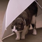膀胱炎かも!猫がトイレで辛そうにしている時