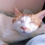 猫がかゆがって体をかく理由とは?