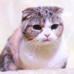 猫の毛が大量に抜けてしまうのは、病気のサイン?