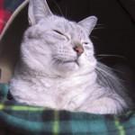 冬の防寒対策には湯たんぽがオススメです。猫たちもヌクヌク♪