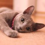 要注意!猫が頭を振るのは病気の可能性も!