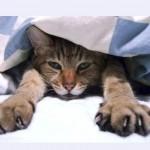 猫のふみふみ行動の意味とは?