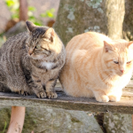 猫が吐くのは習性?でも注意は必要です。
