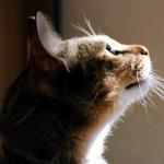 猫が口を開けて呼吸する。考えられる病気は深刻なものばかり!
