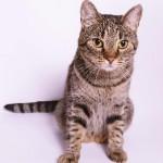 猫のよだれは病気のサインかも!危険信号を見逃さないで!