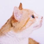 猫が涙を流す原因とは?悲しい訳ではありません。