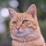 猫も喜ぶ♪上手な体温と体重の測り方