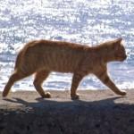 猫の妊娠可能体重をご存知ですか?