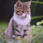 地域猫という活動をご存知ですか?
