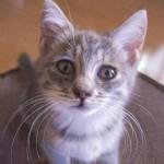 恐ろしい肺炎の前兆かも!猫風邪の症状は放置厳禁