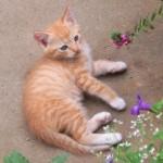 ペット保険の告知義務。違反は猫のためにならない!