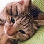 アニコム損保は窓口清算可能!ペット保険証が猫好きに嬉しい!