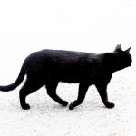 猫におすすめのペット保険を「限度日数」の観点から3つ紹介